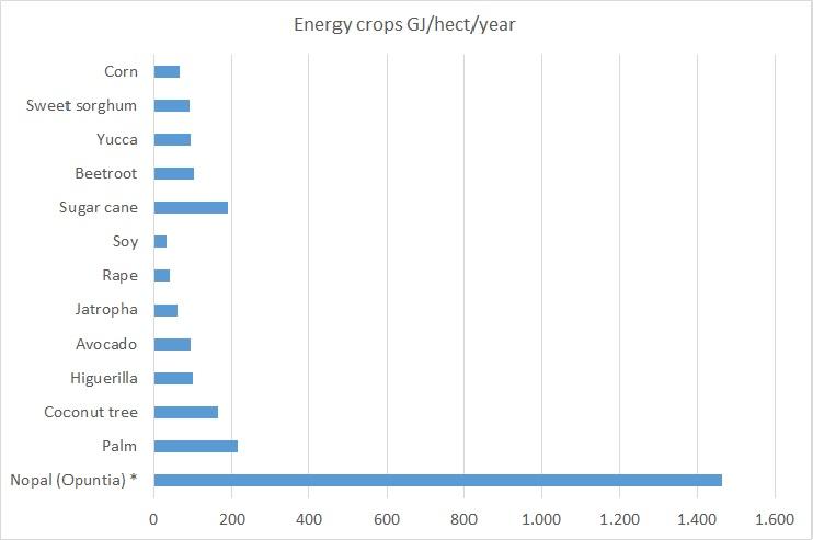 EGE-energy-crops-2